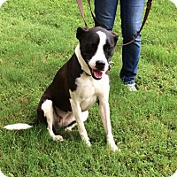 Adopt A Pet :: Muffin - Arlington, TN
