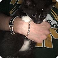 Adopt A Pet :: Levi - Pittstown, NJ