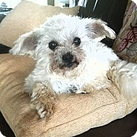 Adopt A Pet :: Murphy - Knoxville, TN