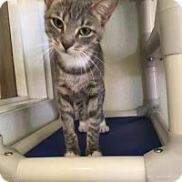 Adopt A Pet :: Jasmine - Cashiers, NC