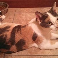Adopt A Pet :: Buttercup - Ocala, FL