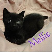 Adopt A Pet :: Mellie - Ozark, AL