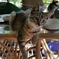 Adopt A Pet :: Tina Turner - McHenry, IL