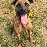 Adopt A Pet :: SHEBA - Newport, OR
