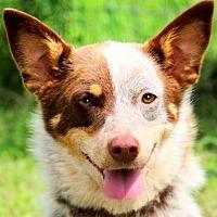 Adopt A Pet :: MISS MARS(A TRUE LADY-GENTLE!! - Wakefield, RI