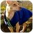 Photo 2 - Chihuahua Dog for adoption in Portland, Oregon - Eva