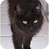 Adopt A Pet :: Bob - El Cajon, CA