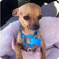 Adopt A Pet :: Spense - Milan, NY