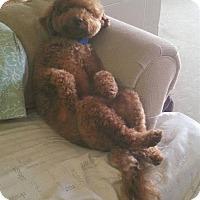 Adopt A Pet :: Derek - Mount Gretna, PA