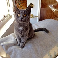 Adopt A Pet :: Periwinkle - Colmar, PA