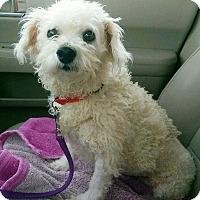 Adopt A Pet :: Heidi - cedar grove, IN