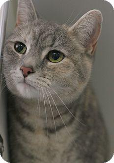 Calico Cat for adoption in Staunton, Virginia - Scout