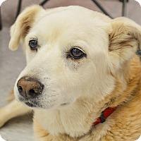 Adopt A Pet :: Sundance - Evergreen, CO