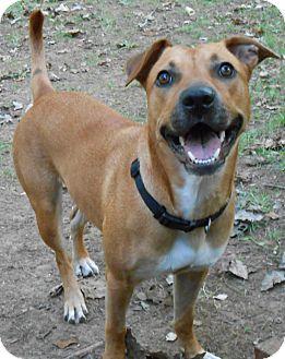 Black Mouth Cur Mix Dog for adoption in ST LOUIS, Missouri - April