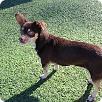 Adopt A Pet :: Girl - Creston, CA