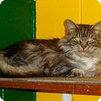 Adopt A Pet :: Cuddles - Salem, WV