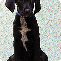 Adopt A Pet :: Turk - Waldorf, MD