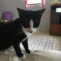 Adopt A Pet :: Nelson Knottingham - Brooksville, FL