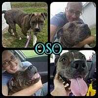 Adopt A Pet :: Oso - Greenville, NC