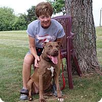 Adopt A Pet :: Rogue-Ro Ro - Elyria, OH