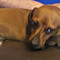 Adopt A Pet :: Ruckus - Boulder, CO