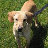 Adopt A Pet :: Tim - Batavia, OH