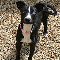 Adopt A Pet :: Fizzle - Lacon, IL
