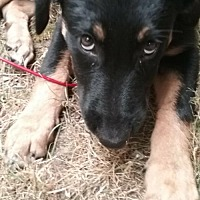 Adopt A Pet :: Ohana - Adopted! - Issaquah, WA