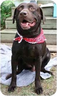 Labrador Retriever Dog for adoption in Cumming, Georgia - Rommell