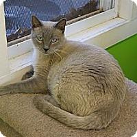 Adopt A Pet :: Apollo - Memphis, TN
