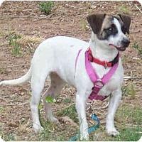 Adopt A Pet :: FLOWER - Phoenix, AZ