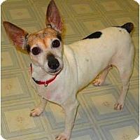 Adopt A Pet :: Vika - Oklahoma City, OK