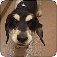 Adopt A Pet :: Sage - Phoenix, AZ