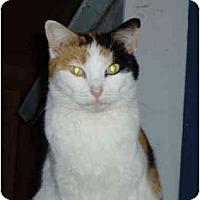 Adopt A Pet :: Megan - Pascoag, RI