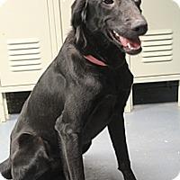 Adopt A Pet :: Miranda - Hamburg, PA