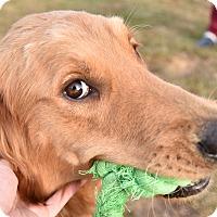 Adopt A Pet :: Naomi and Wynonna - New Canaan, CT