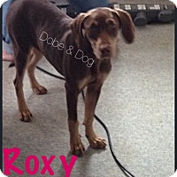 Adopt A Pet :: Roxie - Wichita, KS