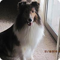 Adopt A Pet :: Beki - apache junction, AZ