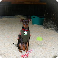 Adopt A Pet :: Gypsy and Pebbles - Eugene, OR