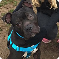 Adopt A Pet :: Deputy - Shrewsbury, NJ
