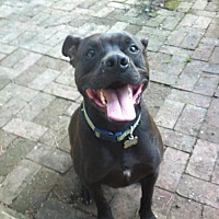 Adopt A Pet :: Sheldon (California) - Fulton, MO