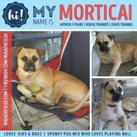 Adopt A Pet :: Morticai - New Port Richey, FL
