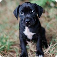 Adopt A Pet :: Sally $250 - Seneca, SC
