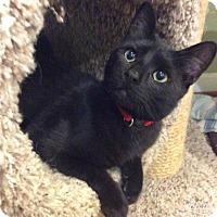 Adopt A Pet :: Blizzard - Breinigsville, PA