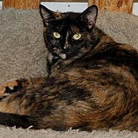 Adopt A Pet :: Princess - Salem, WV