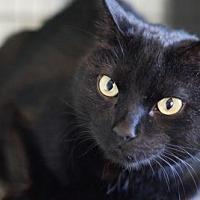 Adopt A Pet :: Ni Ni - Bealeton, VA