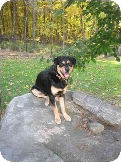 Rottweiler Mix Dog for adoption in Brewster, New York - Izzy