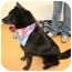 Photo 3 - Border Collie/Labrador Retriever Mix Dog for adoption in Cincinnati, Ohio - Fly