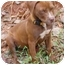 Photo 3 - Pit Bull Terrier Puppy for adoption in Inman, South Carolina - Barney