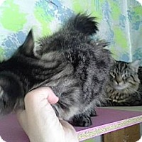 Adopt A Pet :: Uma - Tarboro, NC